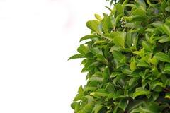 bush стоковые изображения