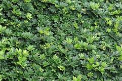 bush стоковое изображение rf