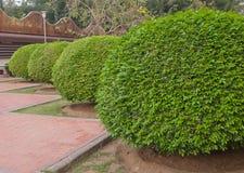 Bush Zdjęcie Royalty Free
