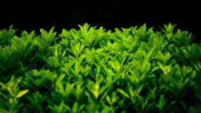 bush стоковые фото