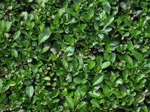 bush Стоковые Изображения RF