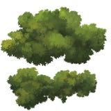 Bush Royaltyfria Bilder