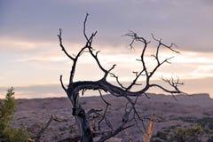 Bush againt Purple Skies. Brush silhouette against purple skies Stock Images