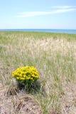 Bush amarillo aislado en la playa Foto de archivo