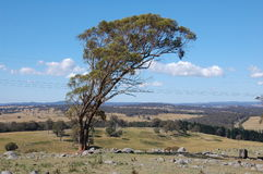 ландшафт bush armidale стоковое изображение rf