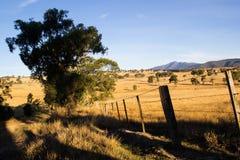 Bush australiano en la puesta del sol Fotos de archivo libres de regalías