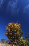 Bush in autumn Stock Photo