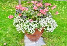 Bush av blommor i en blomkruka i en parkera Arkivfoton
