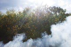 Bush av lös solrosblom i gul färgrik plats i rök på Da-laten, Vietnam royaltyfri fotografi
