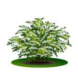 Bush avec des feuilles et des fleurs de vert Photos stock
