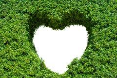 Bush avec le trou d'isolement sous forme de coeur Concept d'amour Images stock