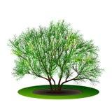 Bush avec les feuilles et l'ombre de vert Photographie stock