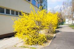 Bush avec les feuilles jaunes photographie stock