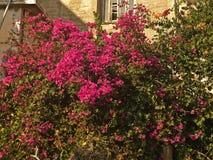 Bush avec les fleurs rouges Photographie stock