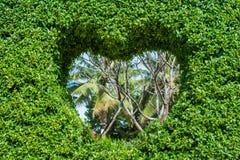 Bush avec un trou sous forme de coeur Concept d'amour Images stock