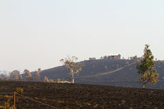 Bush avfyrar Tasmania 2013 Fotografering för Bildbyråer