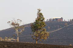 Bush avfyrar Tasmania 2013 Arkivbilder