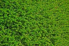 Bush Background Stock Image