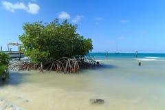 Bush Beach Mangrove Royalty Free Stock Images