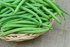 Bush beans Stock Photography