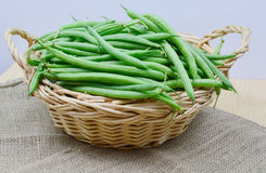 Bush beans Royalty Free Stock Images