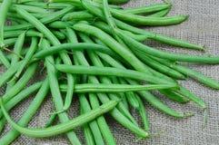 Bush beans Stock Image