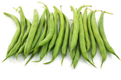 Bush beans Royalty Free Stock Photography