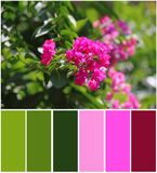 Bush with beautiful flowers outdoors. Natural color palette. For interior or fashion design and art royalty free stock photo