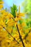 Bush with beautiful yellow Stock Photography