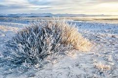 Bush is behandeld sneeuw en ijs met zonsonderganghemel Stock Foto's