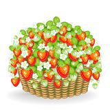 A bush of berries grows in the basket. Ripe, juicy, delicious strawberries. A source of useful vitamins and microelements. Vector vector illustration