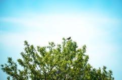 Bush with bird Stock Photography