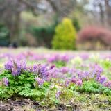 Bush-bloemenclose-up op de achtergrond van naaldbomen in de weide Royalty-vrije Stock Foto
