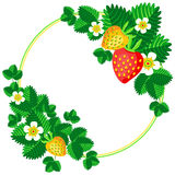 Bush blooming strawberry with berries and flowers frame background for your text vector illustration Royalty Free Stock Image