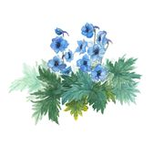 Bush blue anemones. Royalty Free Stock Images