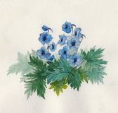 Bush blue anemones. Royalty Free Stock Photos