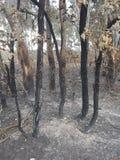 Bush brûlant photos stock