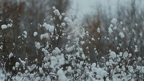 Bush branches in the winter in snow stock footage