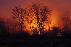 Bush-brand Stock Afbeeldingen