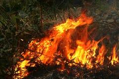 Bush brand i Australien Royaltyfria Foton