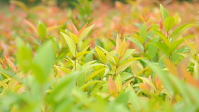 Bush with breeze in the garden Stock Photography