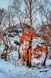 Bush Burning Fotografie Stock