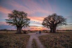 Bush camping w Botswana obraz royalty free