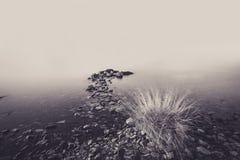 Bush che cresce nel vento sulla costa del lago Baikal Fotografia Stock Libera da Diritti