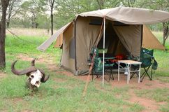Bush che si accampa nel Serengeti Fotografia Stock Libera da Diritti