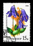 Bush Clematis (Clematis integrifolia), Plants of Russian Steppes. MOSCOW, RUSSIA - MARCH 31, 2018: A stamp printed in USSR (Russia) shows stock illustration