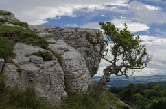 Bush clings to mountain Royalty Free Stock Images
