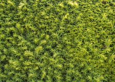 Bush Close Up. Background image with texture stock image