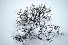 Bush cobriu com a neve Mola de espera fotos de stock