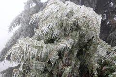 Bush cobriu com o gelo e os sincelos Imagens de Stock Royalty Free